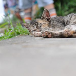 Cat sleeping Ubud Bali ©ItsM.Sherif