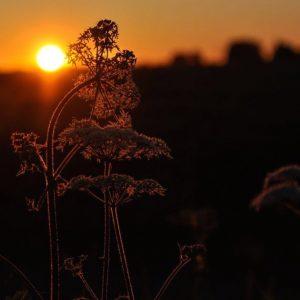 Dutch fields sunset