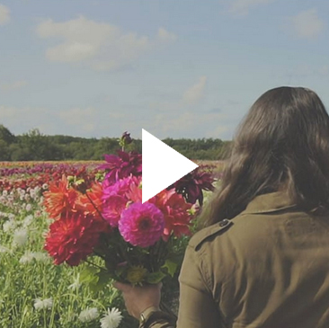 flowerfields Fam Flower Farm brand video